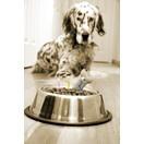 aliments pour chien croquettes pour chiot croquettes. Black Bedroom Furniture Sets. Home Design Ideas
