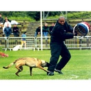 Costume comp�tition - MORIN Sport Canin