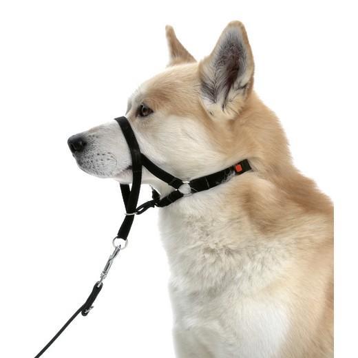Collier d ducation dog control type halti sellerie en nylon laisses colliers museli res - Fabriquer un harnais pour chien ...