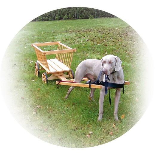 morin chariot d attelage en bois pour chien. Black Bedroom Furniture Sets. Home Design Ideas