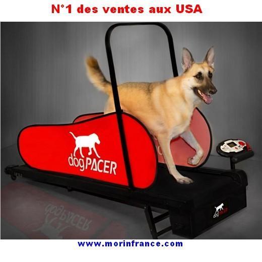 Tapis Roulant Dog Pacer Home Trainer Pour Chien Entrainement Et R Ducation Du Chien Bless Ou