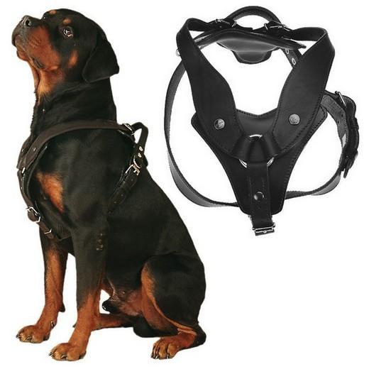 harnais pour chien en cuir scorpion avec poign e pour l 39 intervention des chiens dans le domaine. Black Bedroom Furniture Sets. Home Design Ideas