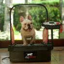 Mini DogPacer - Tapis roulant, Home Trainer pour chiens - image 2