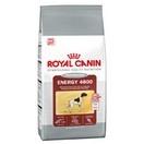 Energy 4800 - Royal Canin