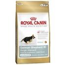 German Shepherd - Berger Allemand junior - Royal Canin pour chiot