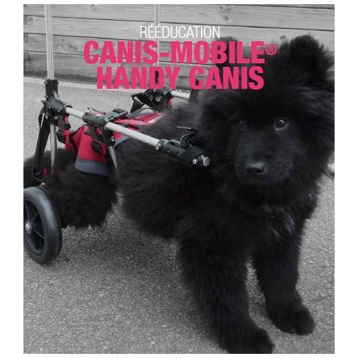 chariot pour chiens handicap s chariot chien mobilit r duite morin. Black Bedroom Furniture Sets. Home Design Ideas